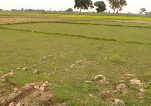 भेरी नदीको छेउमै खेतीयोग्य जमिन सिचाइ अभावमा बाझै