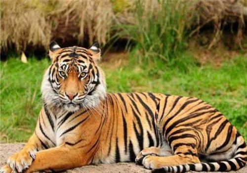 बाघ दिवसको अवसरमा दुई पत्रकार सम्मानित