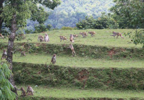 बाँदरले गरायो बैतडीमा उठिबास गाउँ नै छाडेर भारत पलायन